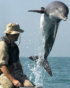 Dolphin Attack!