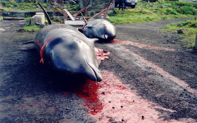 Dead dolphins