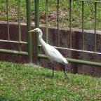 Calling all biology majors and bird watchers